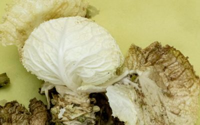 Global Food Waste and the Hidden Household Impact